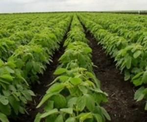 Всё для сельскохозяйственных культур