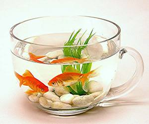 Качественный уход за аквариумом