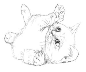 Как нарисовать котёнка карандашём