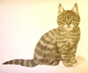 Карандашный рисунок любимой кошки