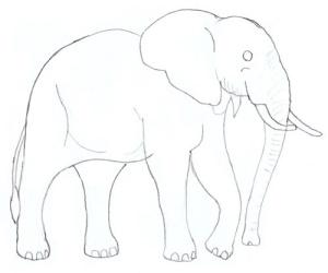Как нарисовать большого и доброго слона