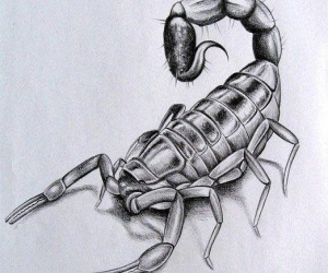 Как нарисовать скорпиона в 3д-стиле